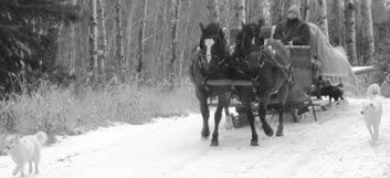 sleigh ride at KB Trails